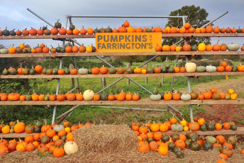 Farrington's Pumpkin fest, Somerset