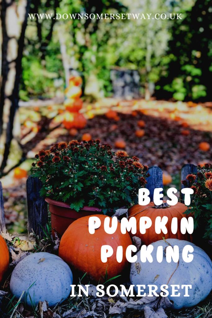 Best pumpkin picking in Somerset